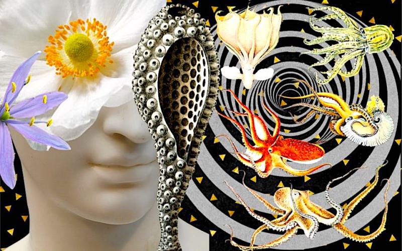 Healing Emotions - Shelley Klammer