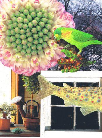 Fish Window